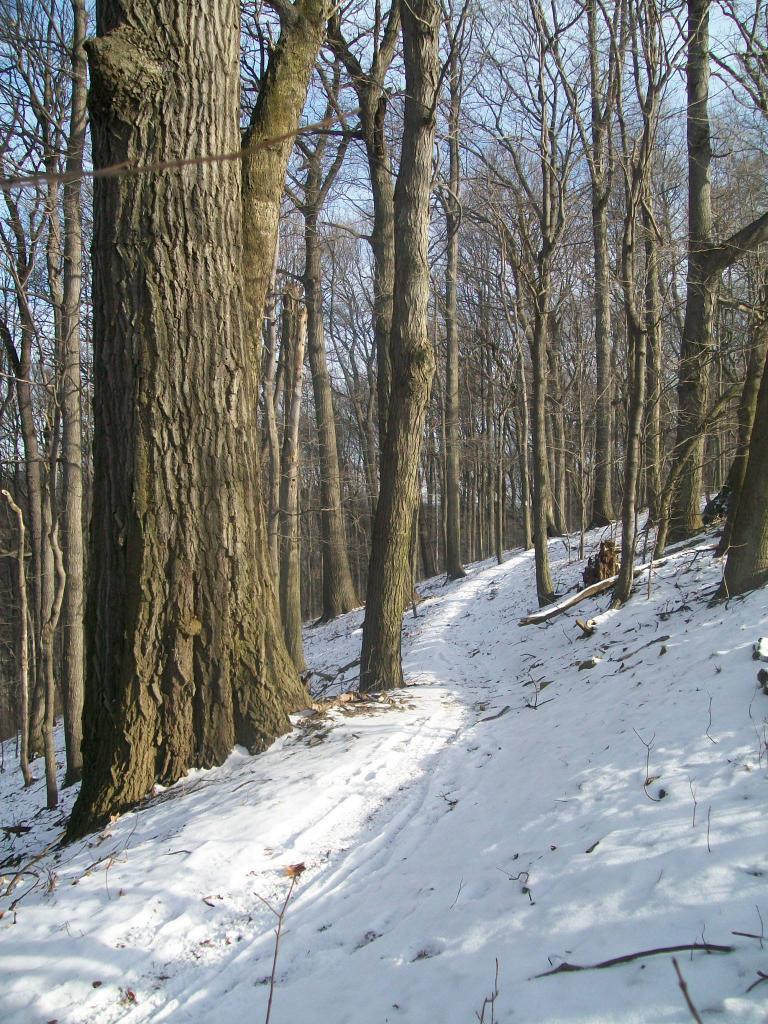 Photo Assignment: Snow-002.jpg