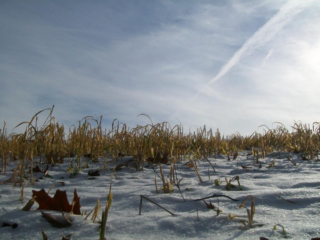 Photo Assignment: Snow-003.jpg