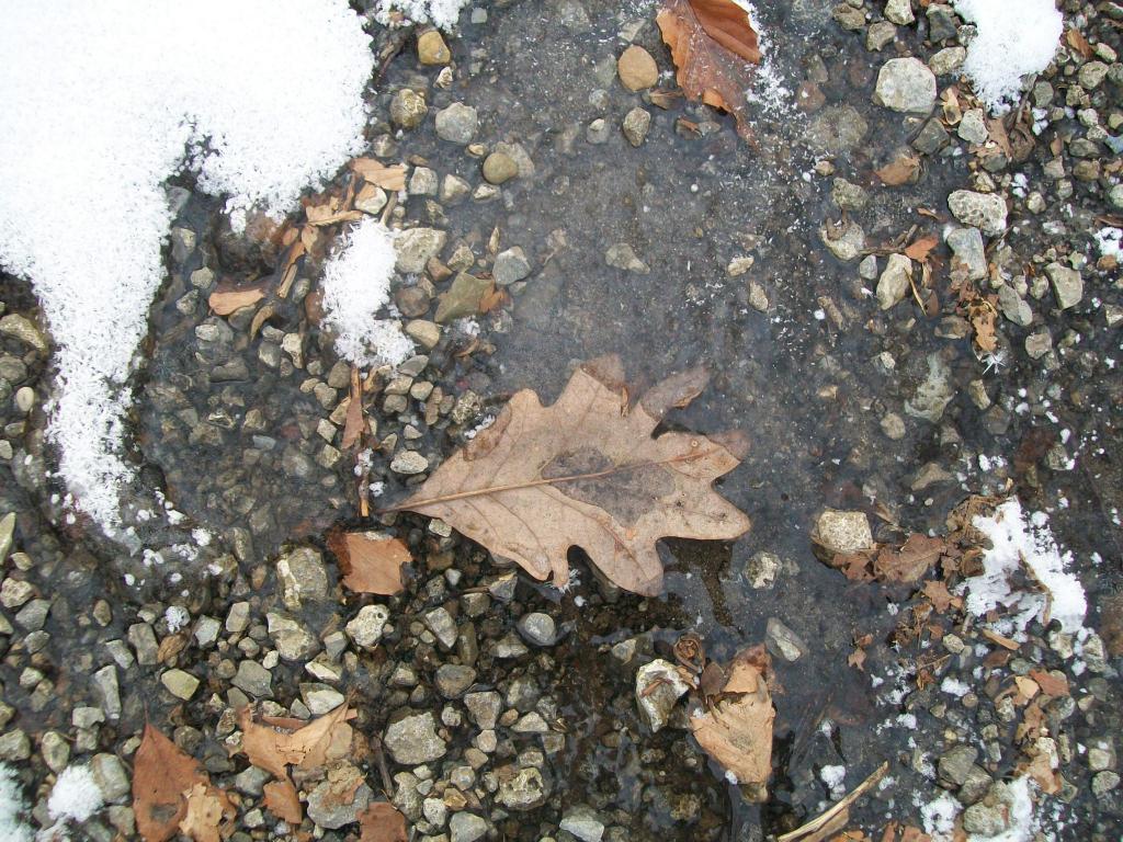 Photo Assignment: Snow-010.jpg