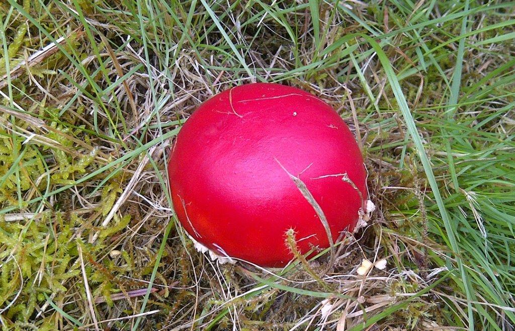 Mushrooms....Post your pics...-010.jpg