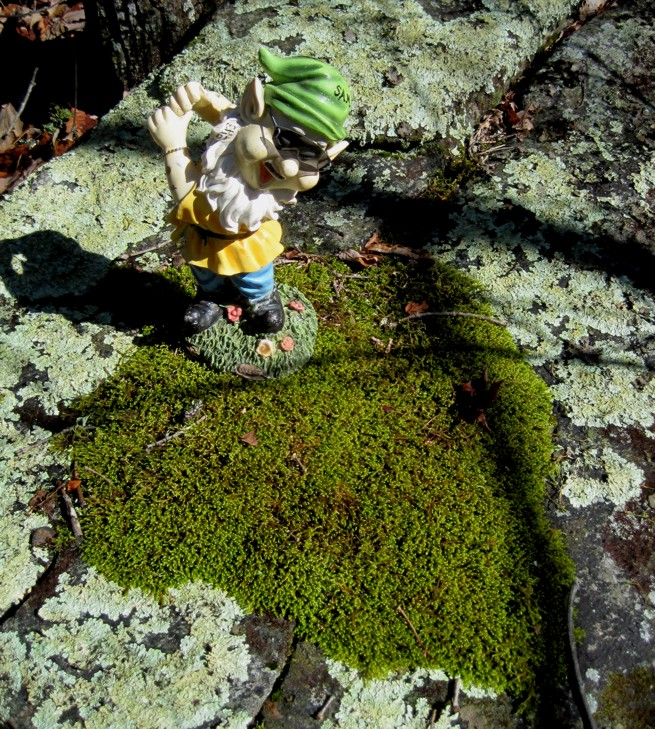 Adventures with the Pisgah Gnome-012412-012s.jpg