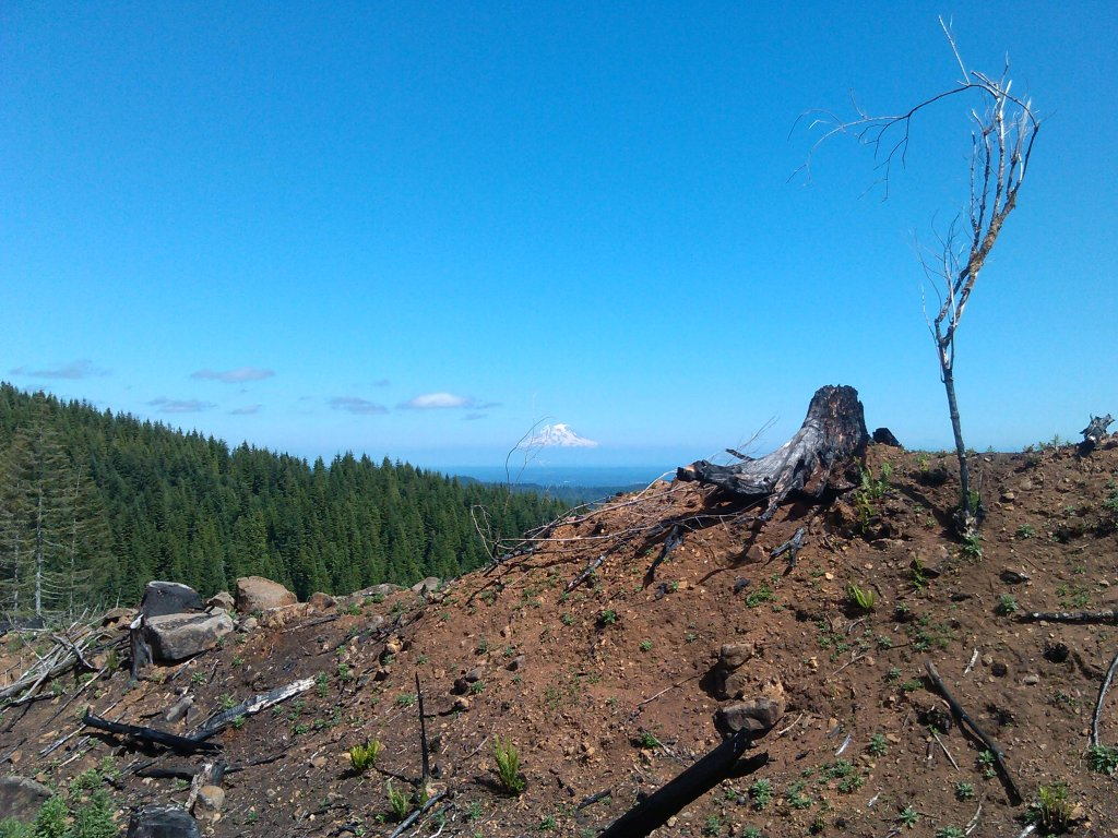 The NW side of Capitol Forest?-016.jpg