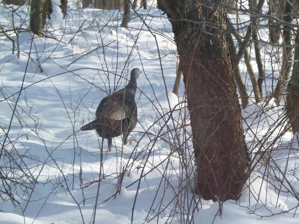 Wildlife you have seen on trail...post your pics...-020.jpg