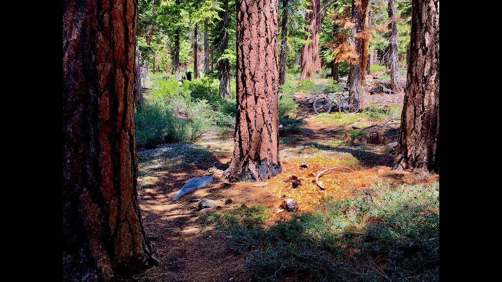 Trail Pics-022c832e-175e-4e59-bb2c-2c294a38427f.jpg