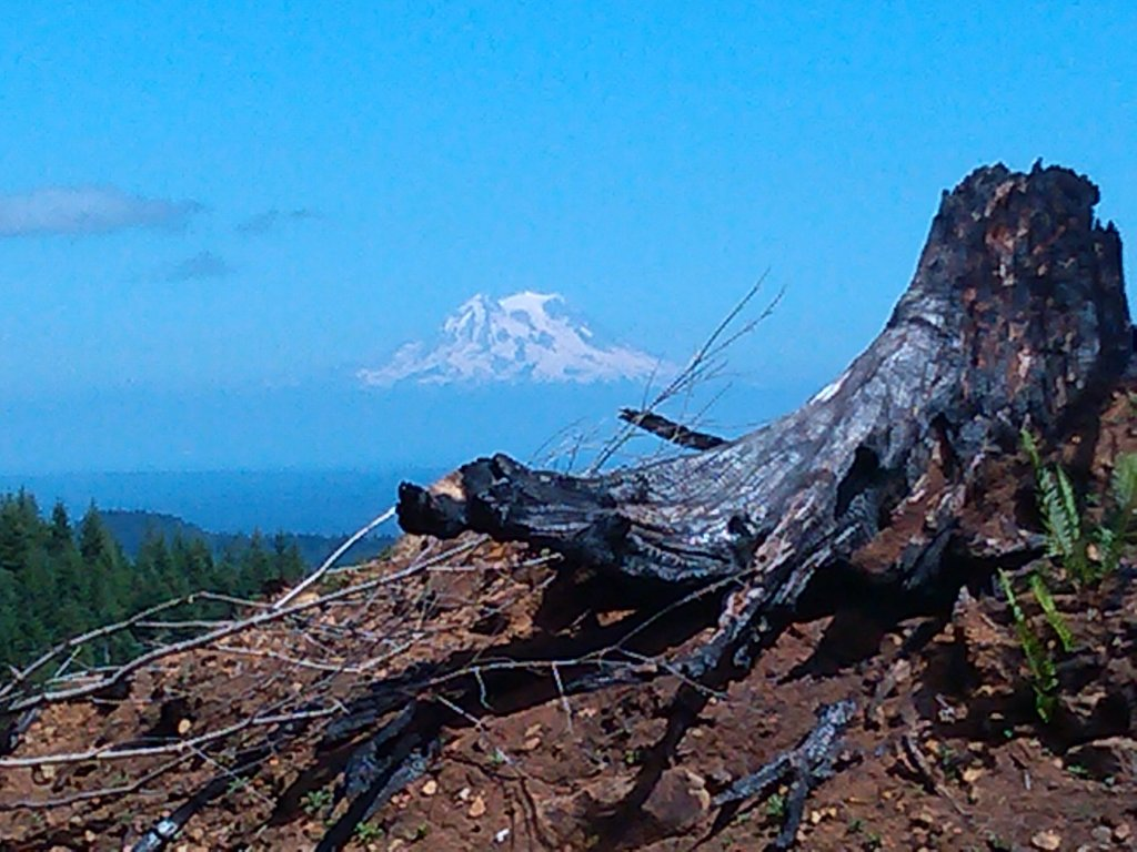 The NW side of Capitol Forest?-025.jpg