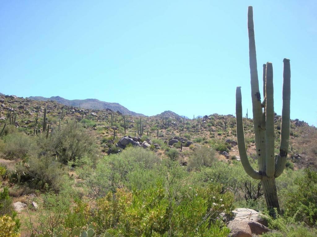 Four Peaks on a hot spring day-02_big_saguaro.jpg
