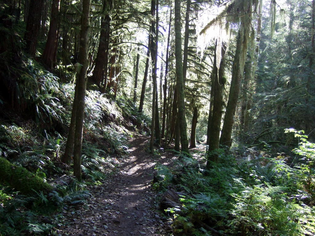 Scenic XC trails near Vancouver/Squamish - early October-036.jpg