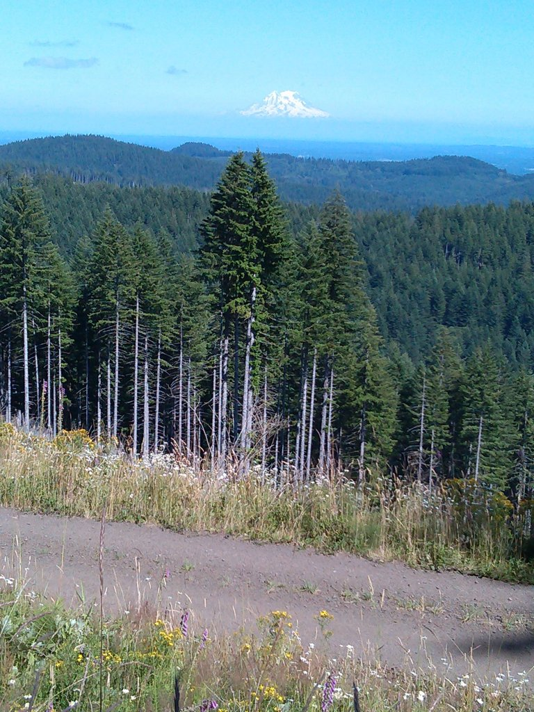 The NW side of Capitol Forest?-054.jpg