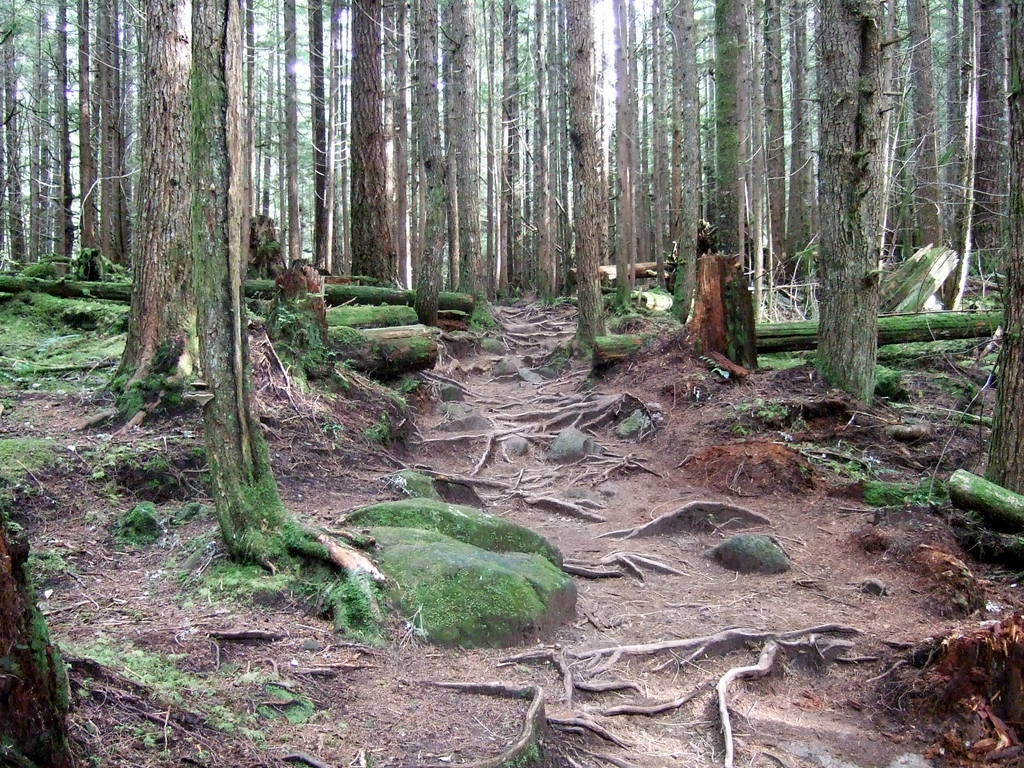 Scenic XC trails near Vancouver/Squamish - early October-055.jpg