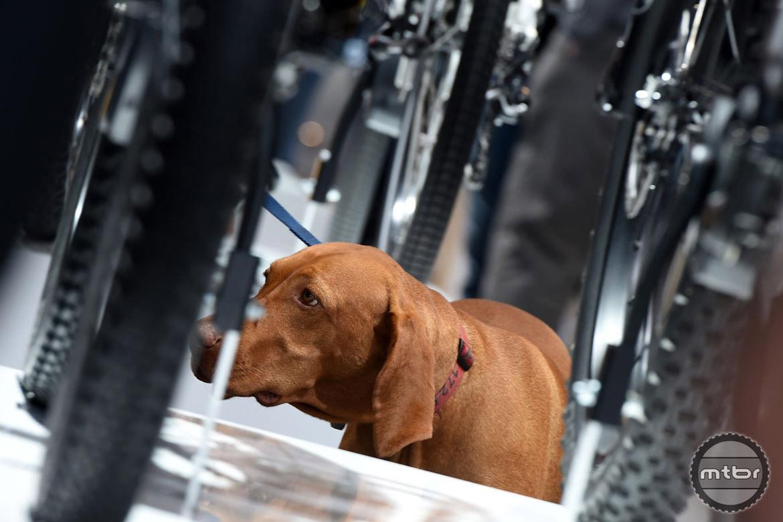 Dogs allowed. Photo courtesy Eurobike