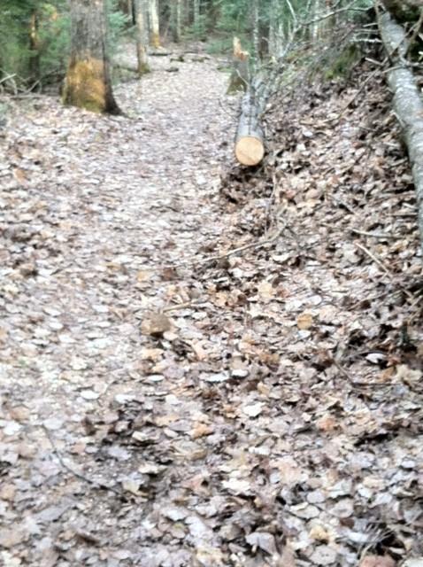 Safety margin on sides of trail-05b.jpg