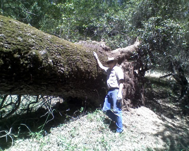 "Pliny's ""Tree Down at Henry W Coe SP"" Contest.-06-02-12_1034_web.jpg"