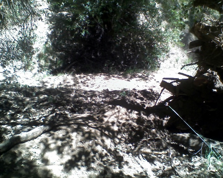 "Pliny's ""Tree Down at Henry W Coe SP"" Contest.-06-02-12_1158_web.jpg"