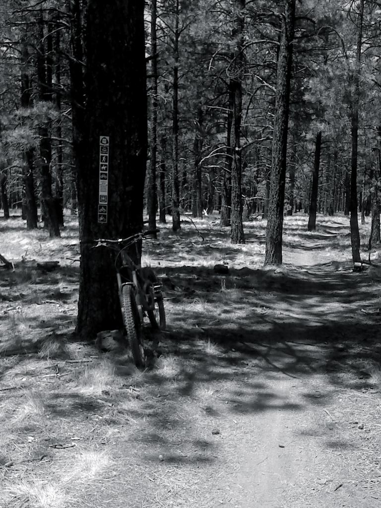 Bike + trail marker pics-0603121114.jpg
