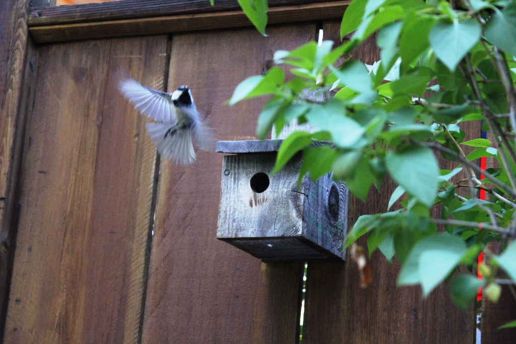 OT: Bird Pix...-065-cropped.jpg