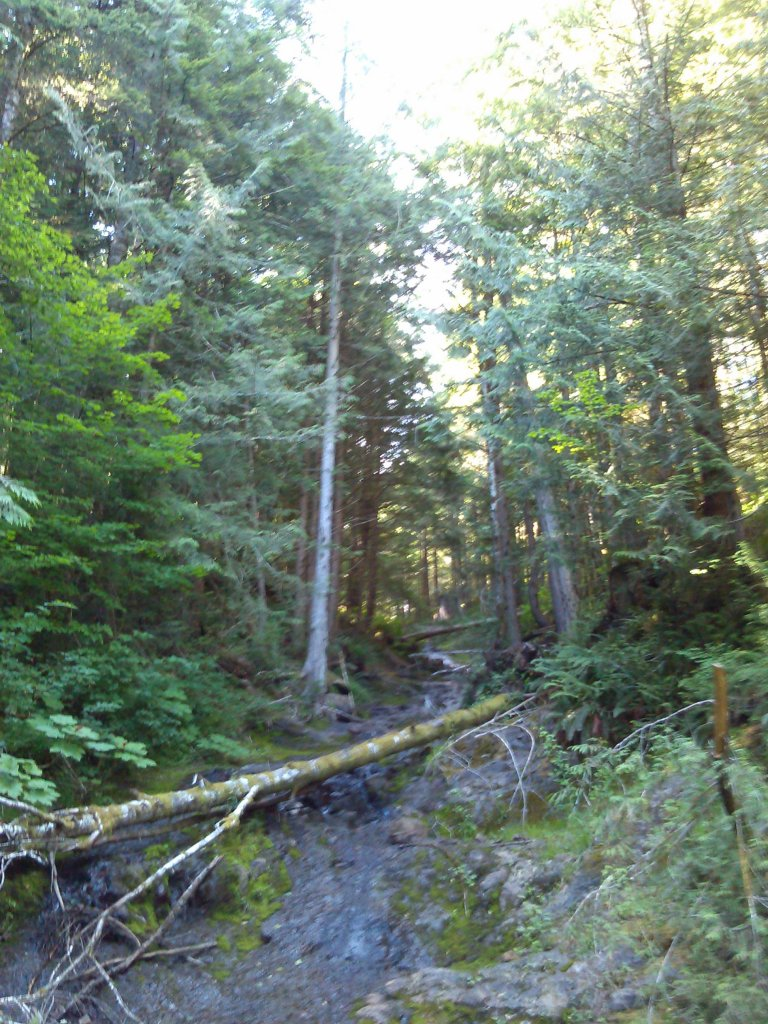 The NW side of Capitol Forest?-076.jpg