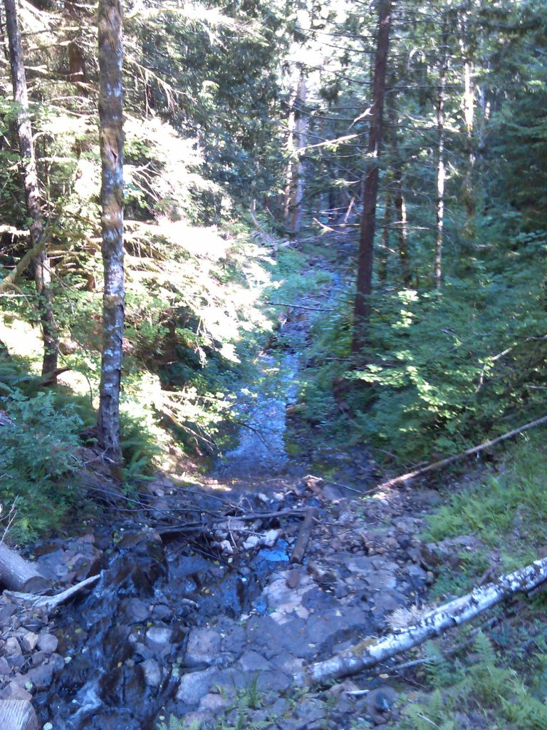 The NW side of Capitol Forest?-078.jpg