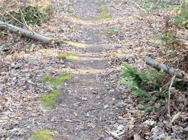 Safety margin on sides of trail-07b.jpg