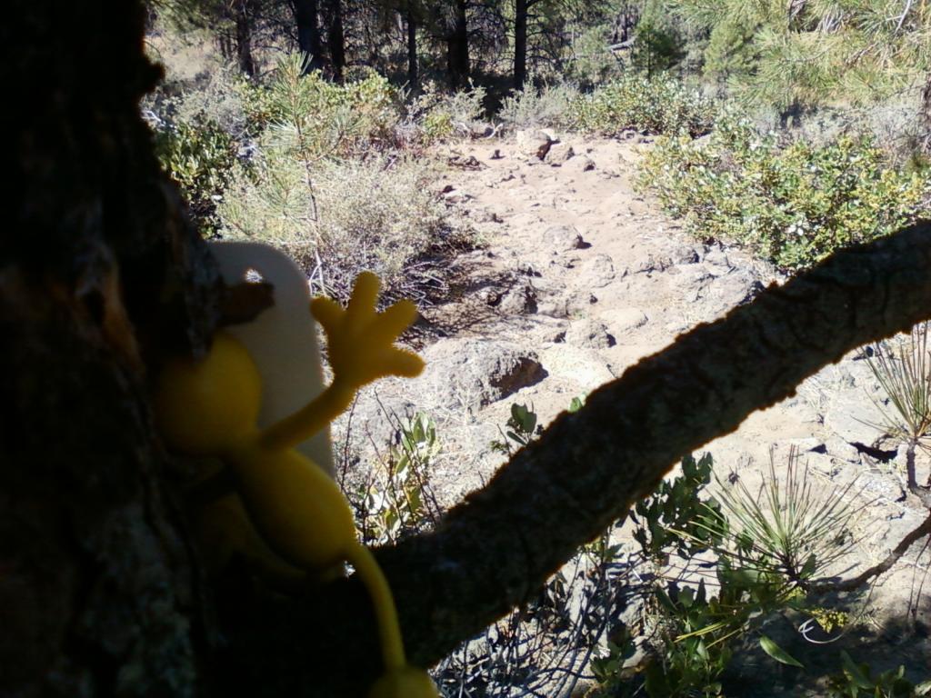 Yellowman game-0811111017.jpg