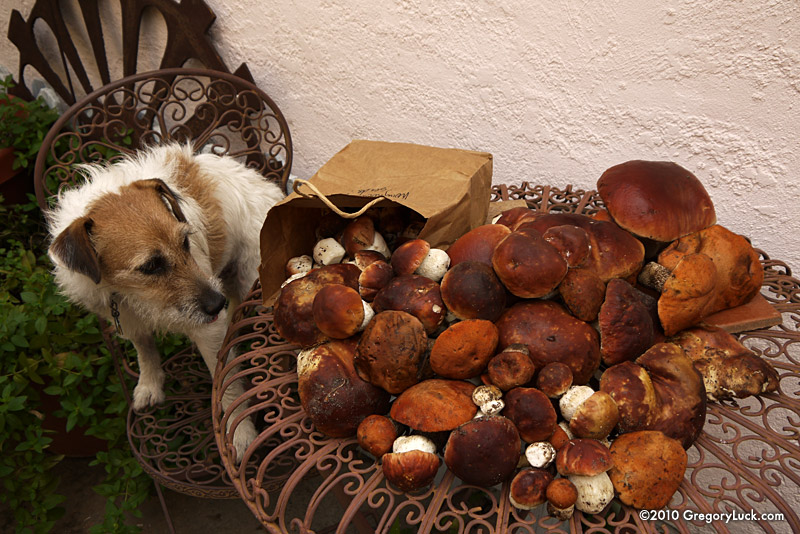 Mushrooms....Post your pics...-0818muchroom82.jpg