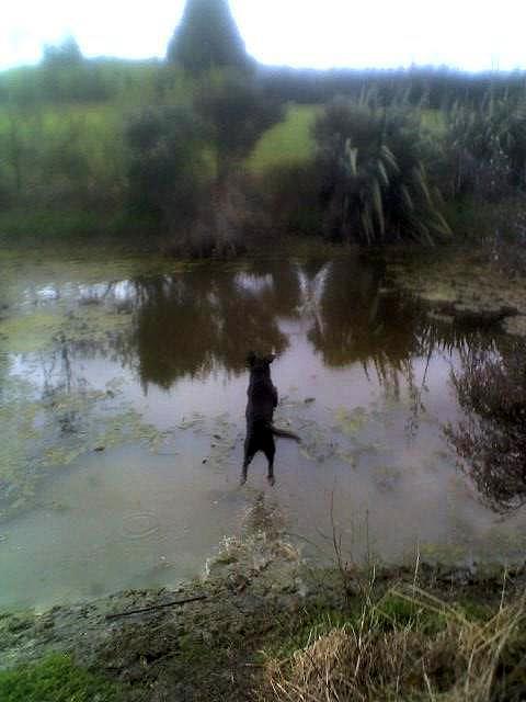 Dogs with Passion-0_95712700_1258229165_xxxpxt__lt_642102642977xxx_15-11-09_0900.jpg