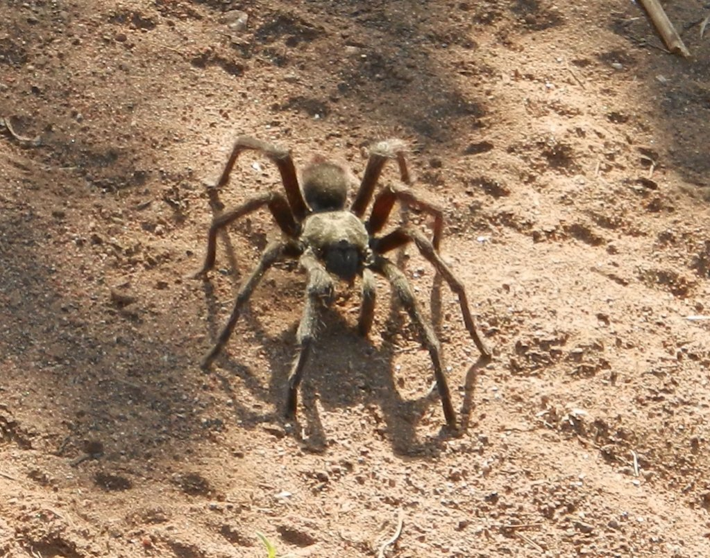 Wildlife you have seen on trail...post your pics...-1.jpg