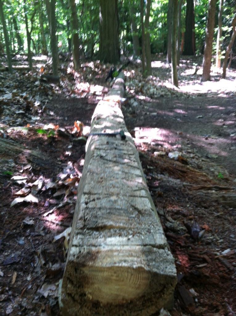 Chainsaw 101: proper way to plane a log-1-mile-log.jpg