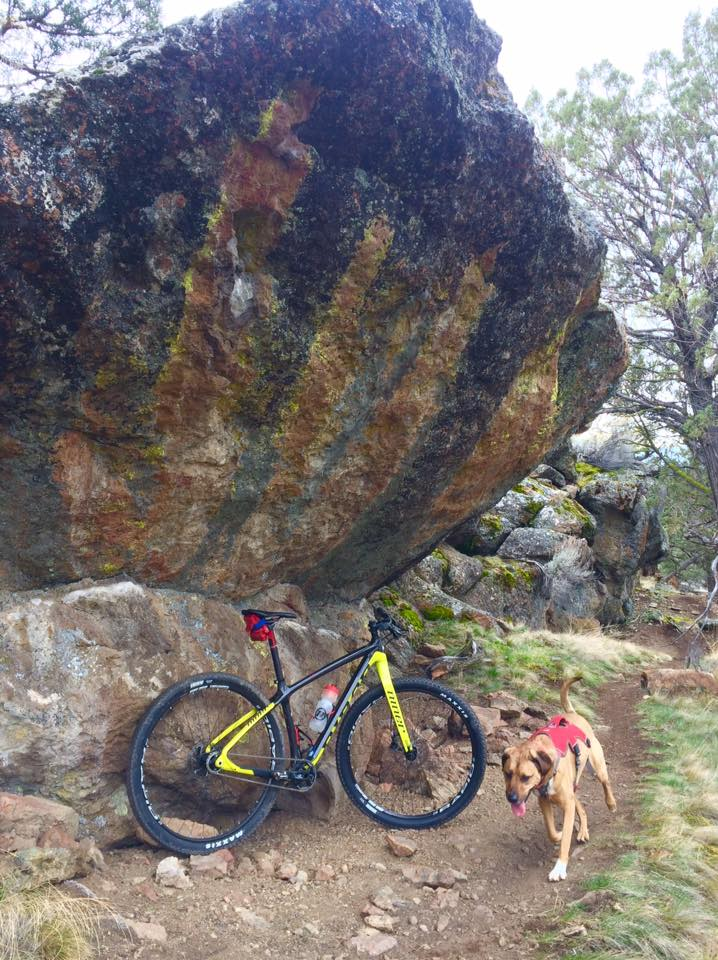 Post your dog with your single speed-1004479_10154187049328287_5849981824344989423_n.jpg