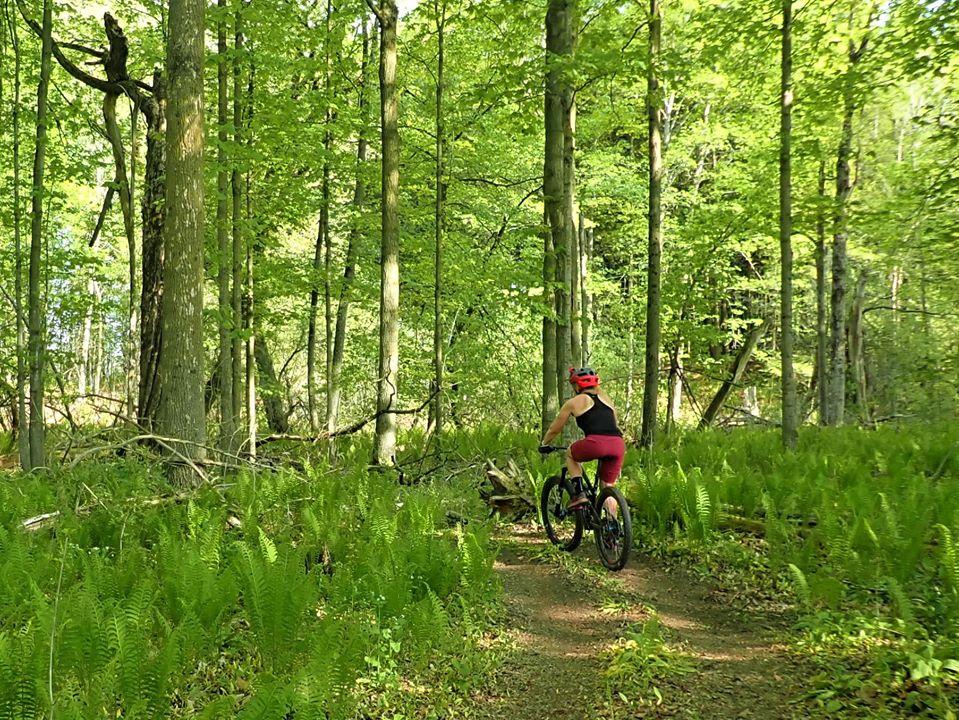 Local Trail Rides-100560133_2703479219896512_1003752157930848256_o.jpg