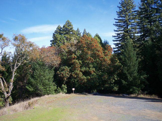 Assignment: Norcal Fall Photos-100_0215.jpg