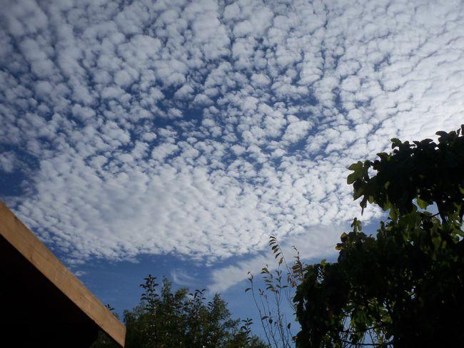Assignment: Norcal Fall Photos-100_0223.jpg