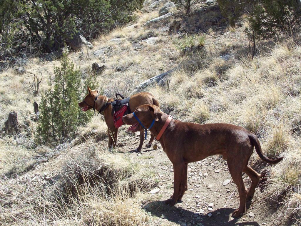Dogs and Singletrack?-100_0687.jpg