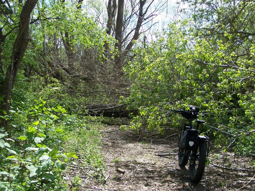 Fat Biking and health-100_3822.jpg