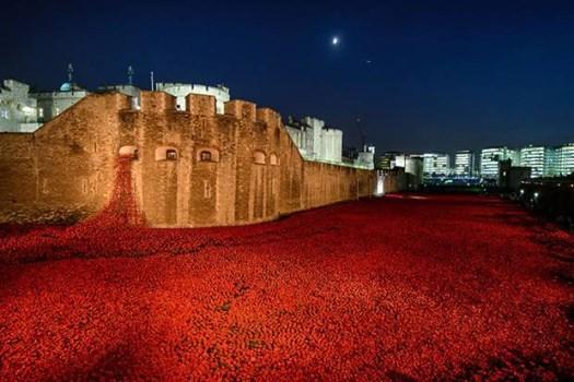 Remembrance/Veterans Day-10313730_836857779691218_6787797924700905334_n.jpg