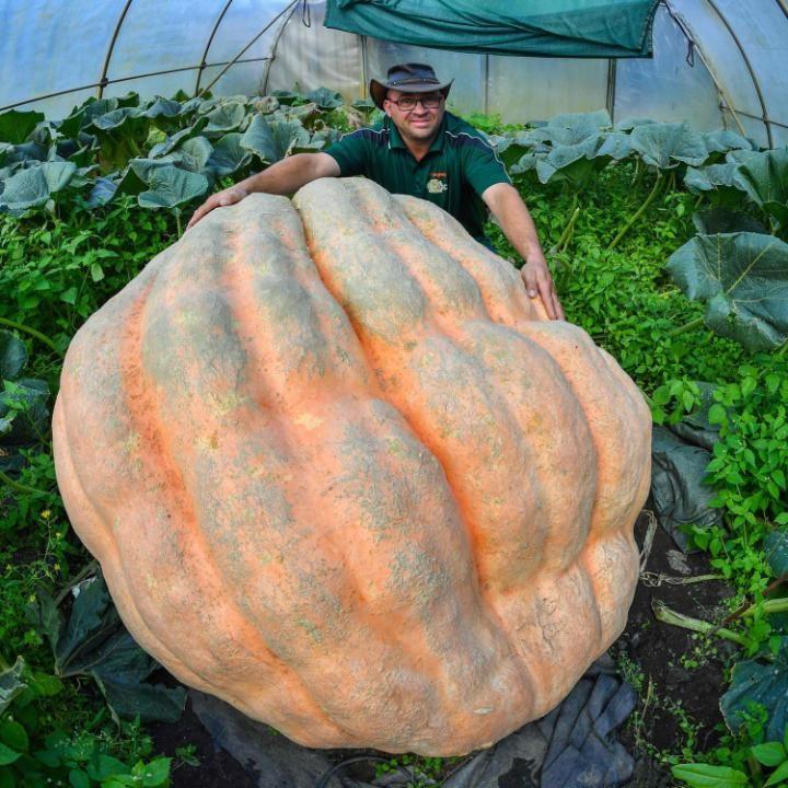 Vegetarian and Vegan Passion-109289703pumpkinnews-large_trans-qvzuuqpflyliwib6ntmjwfsvwez_ven7c6bhu2jjnt8.jpg