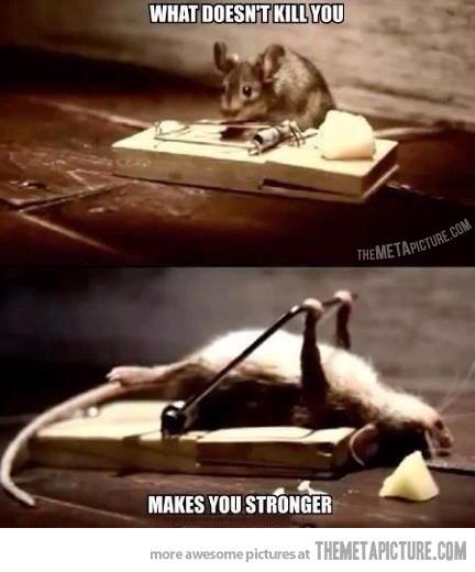 I hate mice-10a0e00b-635f-4e7c-a996-f65ec2d8dbcc.jpeg
