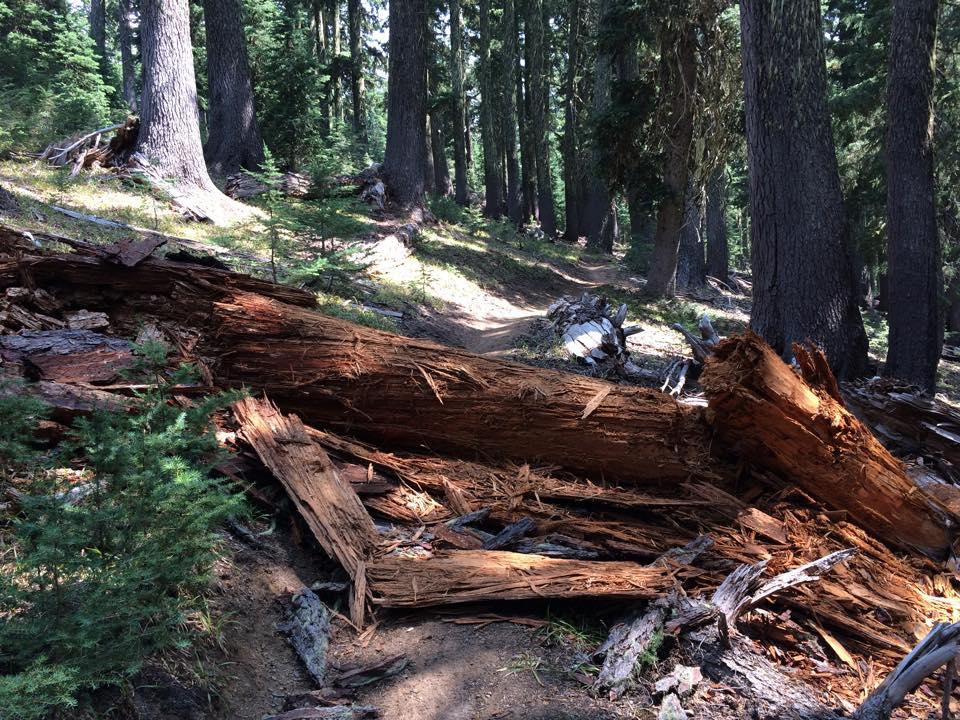 Mountain Bikers Seek to Gut Wilderness Act-11012988_10207405611361732_5995939988086905966_n.jpg
