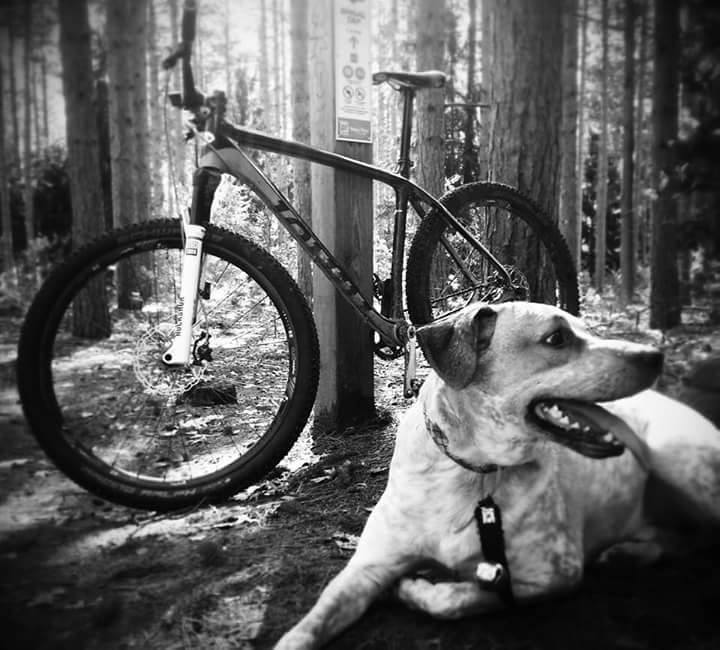 Post your dog with your single speed-11150762_10155394039400623_250245692507834341_n.jpg