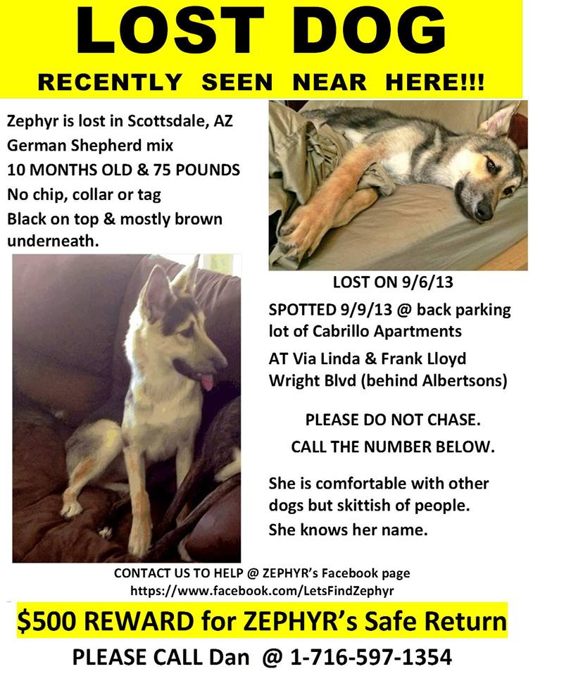 Lost-11 month old German Shepard pup in the Via Linda/Frank Loyd Wrt area.0reward-1240354_520002574752683_1801193589_n.jpg