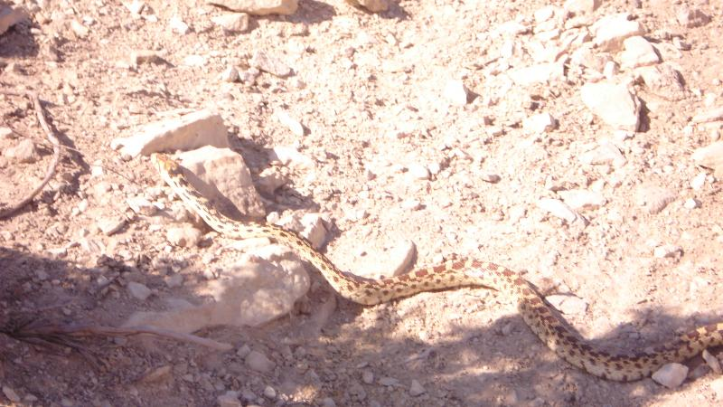 Wildlife you have seen on trail...post your pics...-126_800x450.jpg