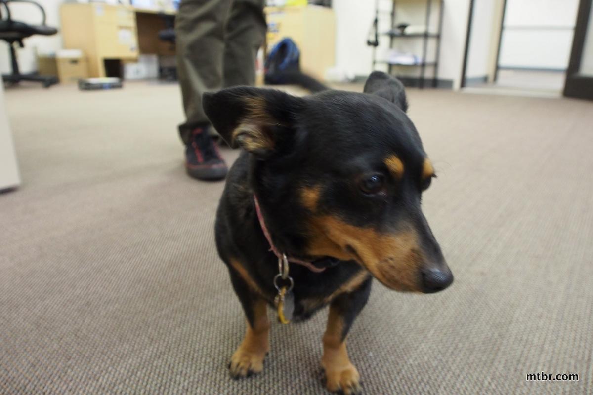 X-Fusion Hilo SL Attack dog, Jenny