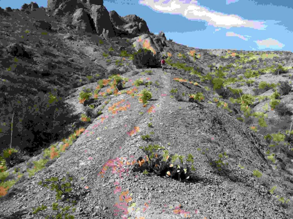 The NM Trail Pix Thread-130.jpg