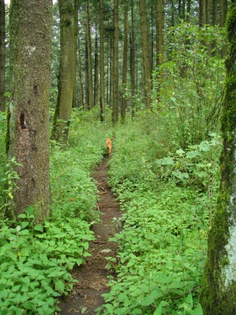 valle del conejo-131.jpg