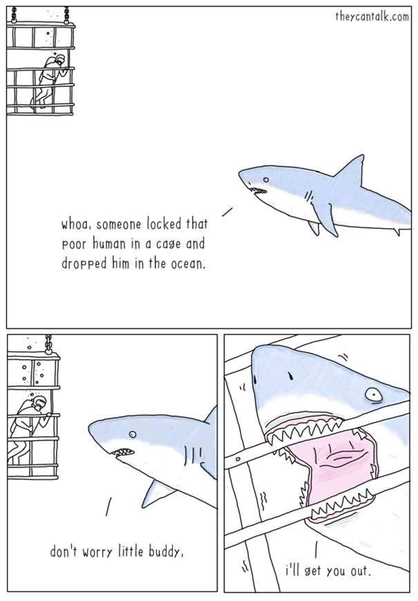 """""""Shark Week""""-13255949_1105174269521361_3616921590255141479_n.jpg"""