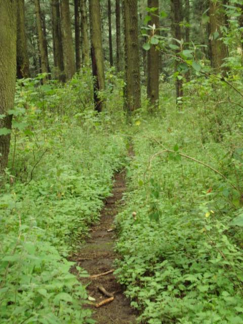 valle del conejo-133.jpg