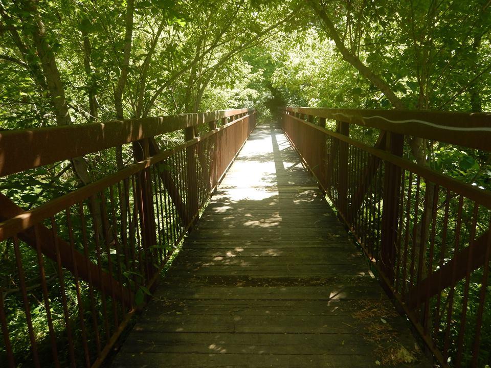 Bridges of Eastern Canada-13532796_1778974962346947_3186166466683814524_n.jpg