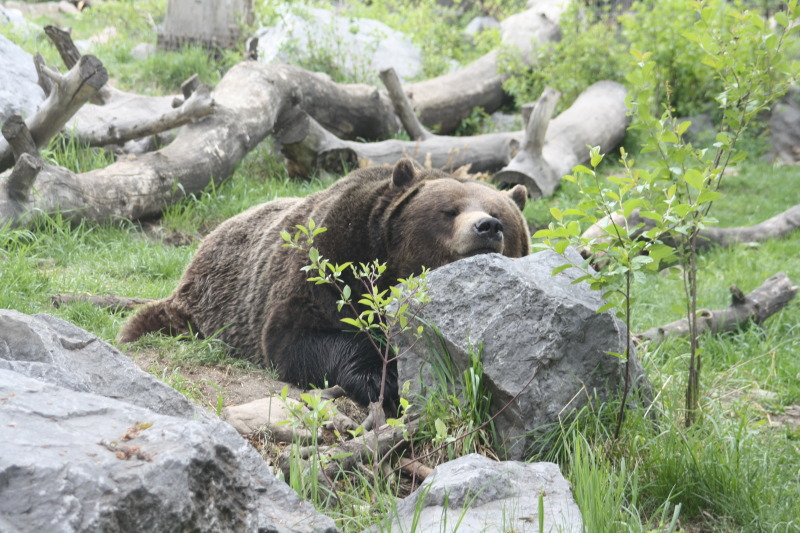 how you deal with bears??-1355.jpg