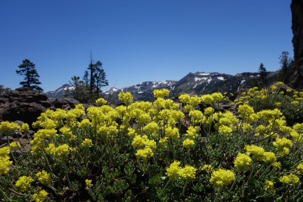 Thunder Mountain / Horse Canyon-13731054_1138041392935396_4373687259134832041_o.jpg