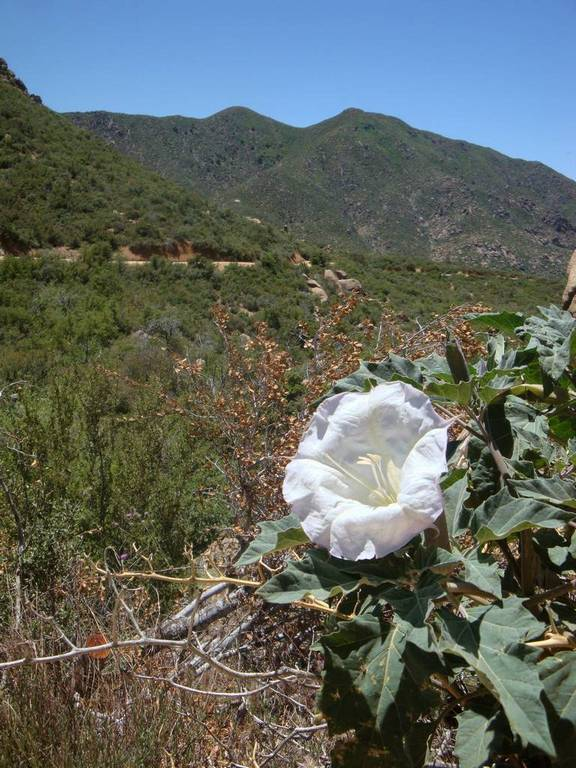Four Peaks on a hot spring day-13_fauna_change.jpg