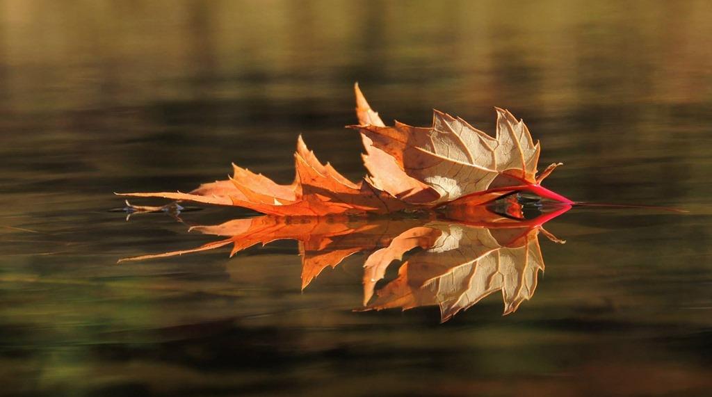 Post Pics of your Fall Foliage!!-1403188_647871941900849_685712555_o.jpg